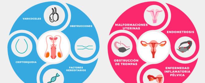 alteraciones de la anatomía que afectan a la fertilidad